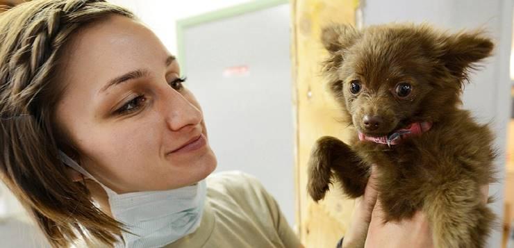 pas kod veterinara