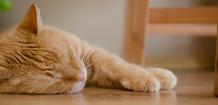 Macka spava