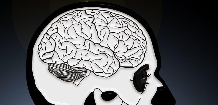 Prikaz mozga